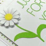 daisy frame tag 2